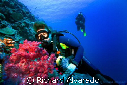 Diver looking at sea fan by Richard Alvarado 